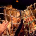 Modenschau LEUCHTSTOFF zur Luminale 2010 in Offenbach
