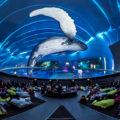 Filmhighlight THE SECRETS OF GRAVITY im Traumzeit-Dome