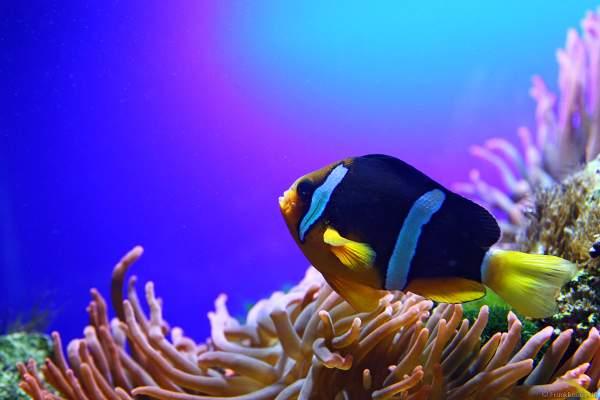 Unterwasserwelten des Meereszentrum Fehmarn