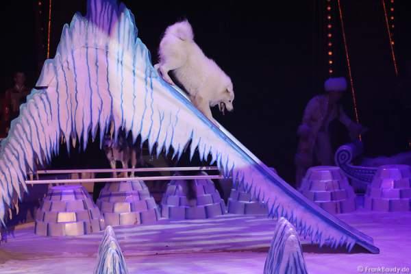 Schlittenhunde bei Petersburger Schlittenfahrt-Circus Roncalli-Salto Vitale