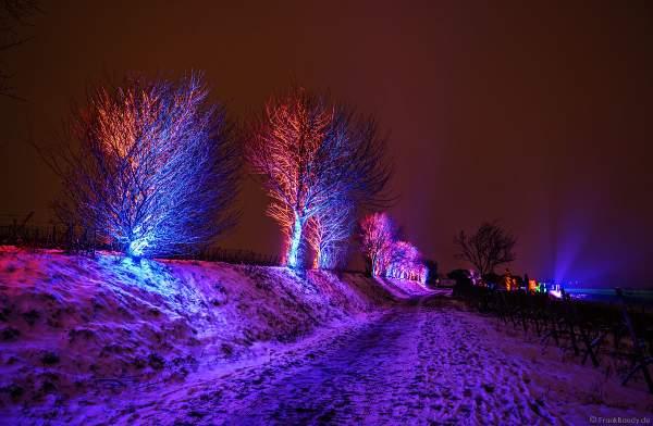 Farbenprächtig beleuchtete Bäume im Schnee bei der Weinbergnacht 2018 in Bad Dürkheim